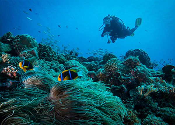 Wat hebben de IONIQ 5 en Healthy Seas gemeen? Beluister onze podcast!